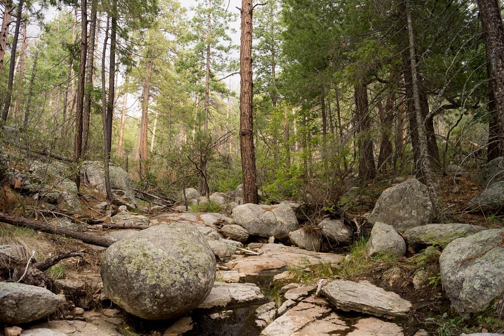 1307 Sycamore Canyon