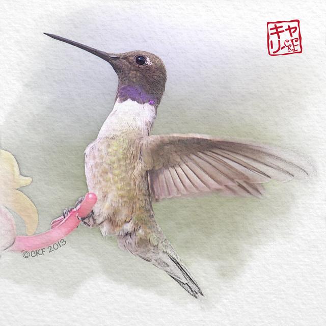 Hummingbird Profiles #2