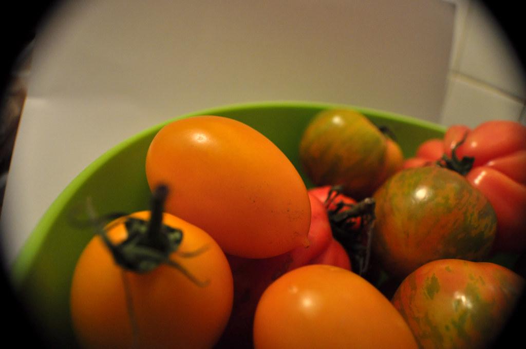 Tomates Multicolores_6