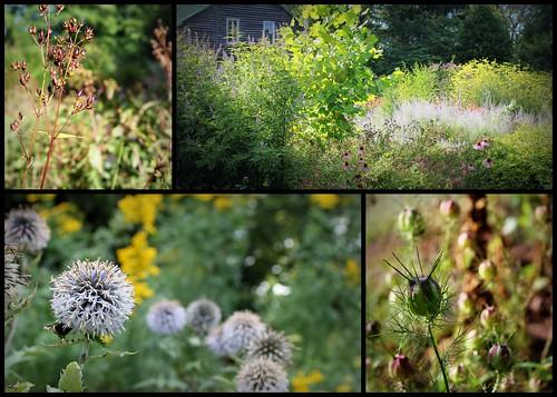 20130804. Hobbit Gardens.