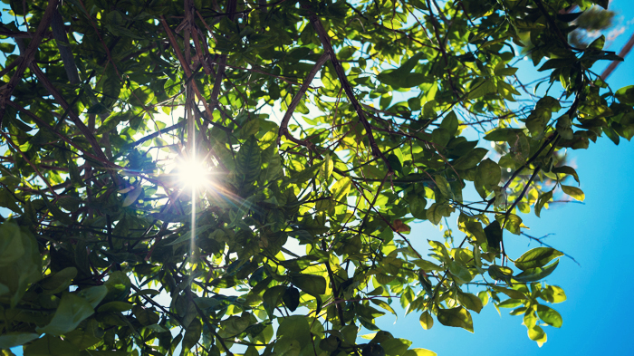 Sun through the trees at Ace Hotel & Swim Club in Palm Springs
