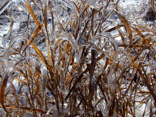 brome in ice