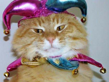 Halloween can be an anxiety provoking time for cats. Keep reading for 5 Halloween safety tips that could make the holiday more fun for your kitty.