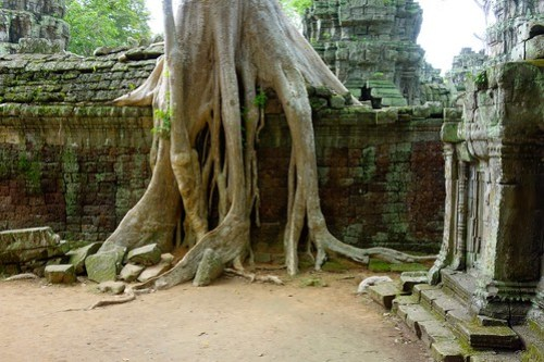 Roots over a wall at Ta Prohm