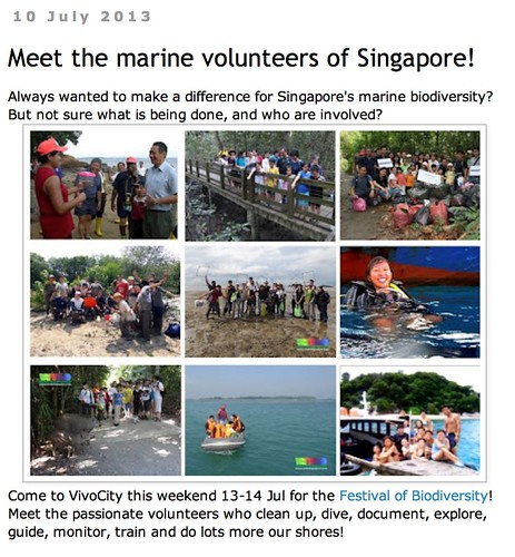 wild shores of singapore: Meet the marine volunteers of Singapore!