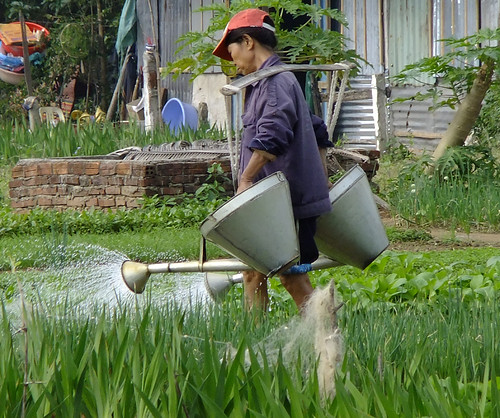 Watering a Herb Garden in Hoi An, Vietname