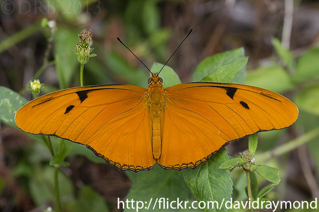 Florida butterfly photograph