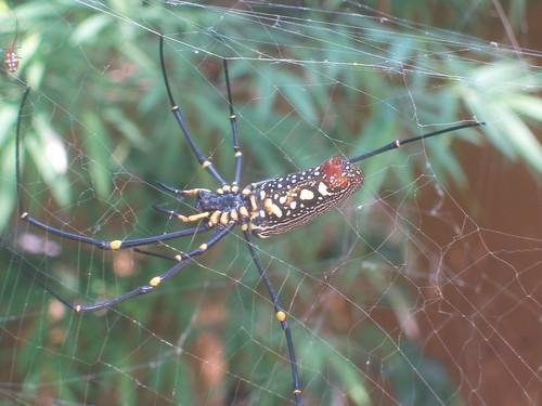 201402010054-spider