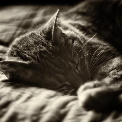 deep in slumber