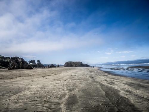 Coastal Redwoods and Fog-008
