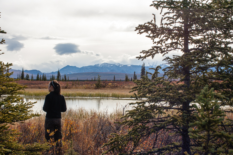 denali national park wonder lake campground
