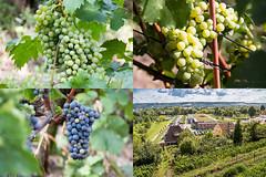 Wein im Weingut Fliegenwedel
