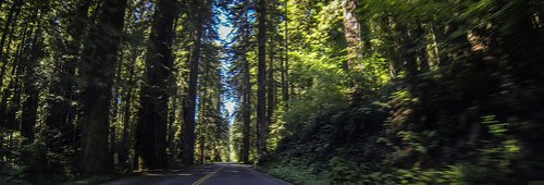 Redwoods and Elk-075