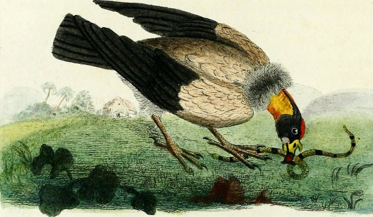 "One of the poems in the collection is called ""The Vulture."" Color illustration of vulture eating a snake from page 48 of ""A general history of birds"" (1821)"