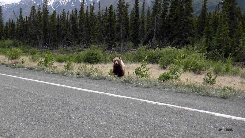 Bike-urious Alaska
