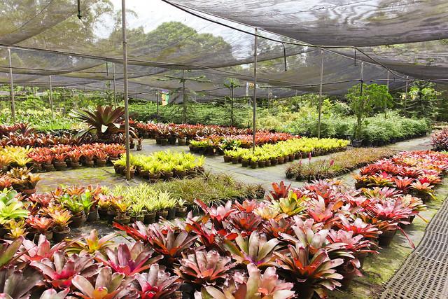 Ming's Garden, Tagaytay