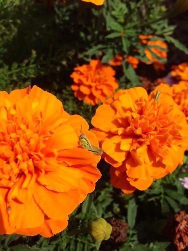 In my garden!