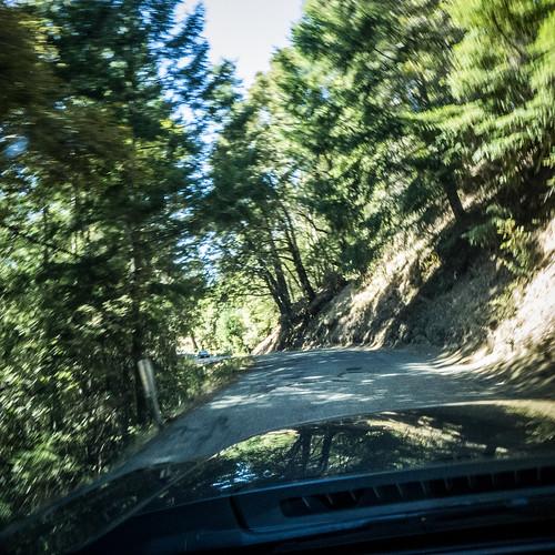 Coastal Redwoods and Fog-084