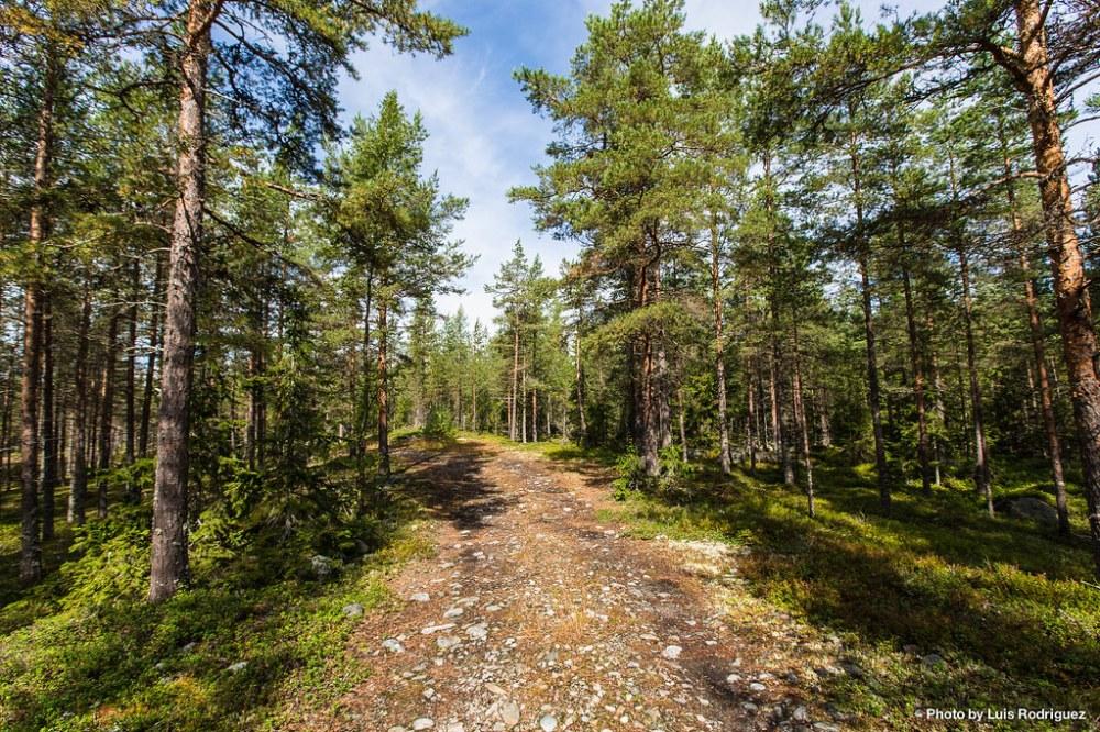 4 días en Laponia sueca-36