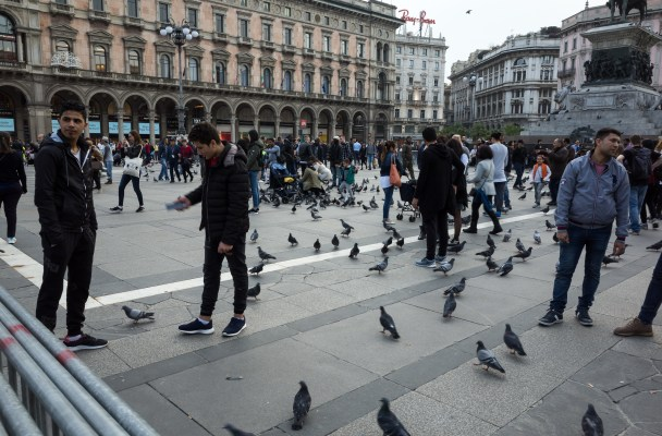 Milan - Crazy Birds