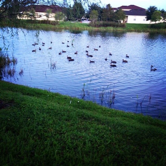 Today's run was meh, but at least I felt like the duck posse was cheering me on. #seeonmyrun