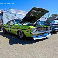 Sam Posey's 1970 Dodge Challenger at the Rolex Monterey Motorsports Reunion 2014
