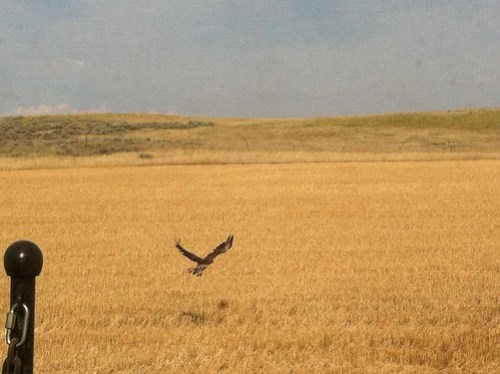 Z Crew: Hawk