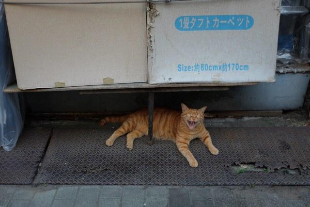 CAT 2014/08/21 X1002399