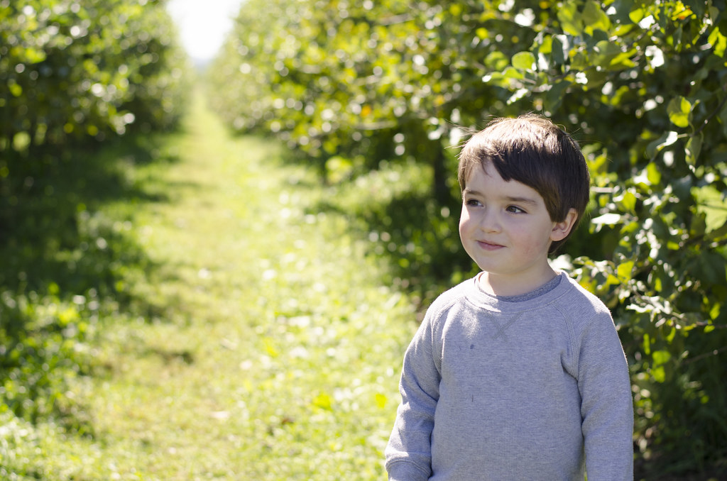 short story // apple picking 1