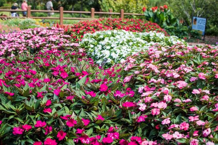 garden flowers pink red white pretty