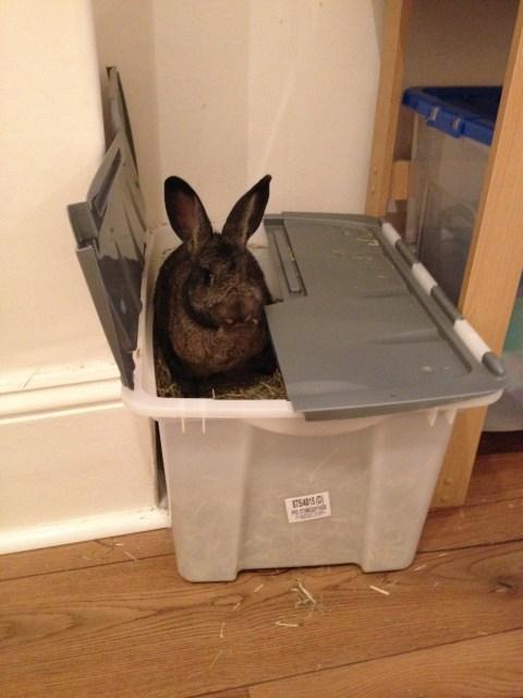 Oscar in hay box (5)