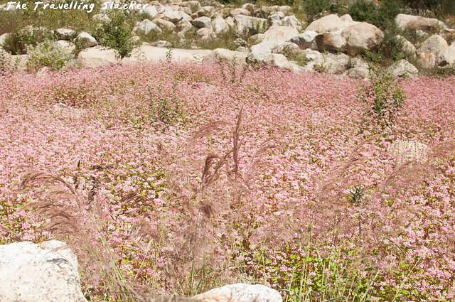 Sangla Valley (16)
