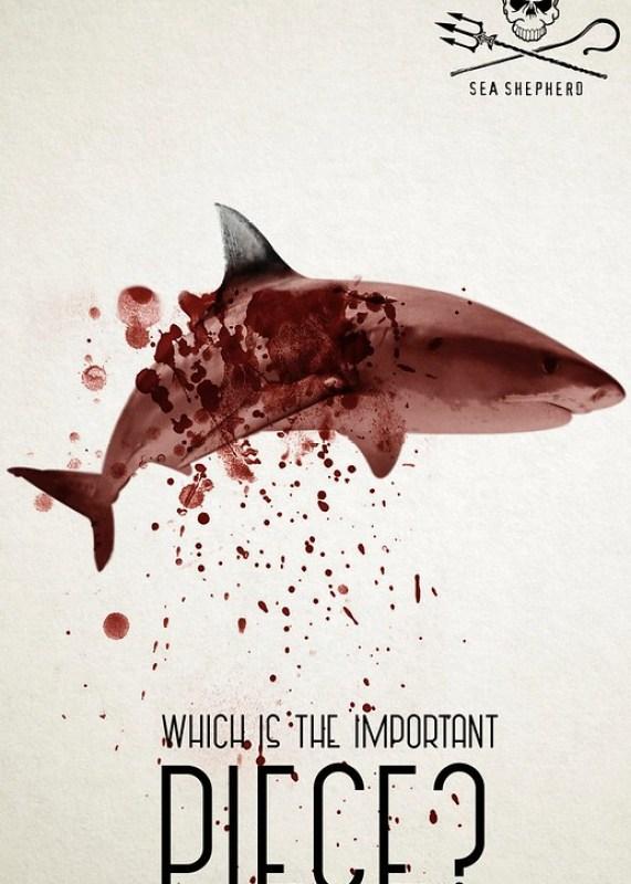 Sea Shepherd - Shark 2