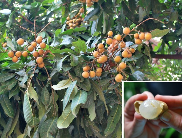 Frutas Del Sudeste Asiático Que Debes Probar Antes De Morir