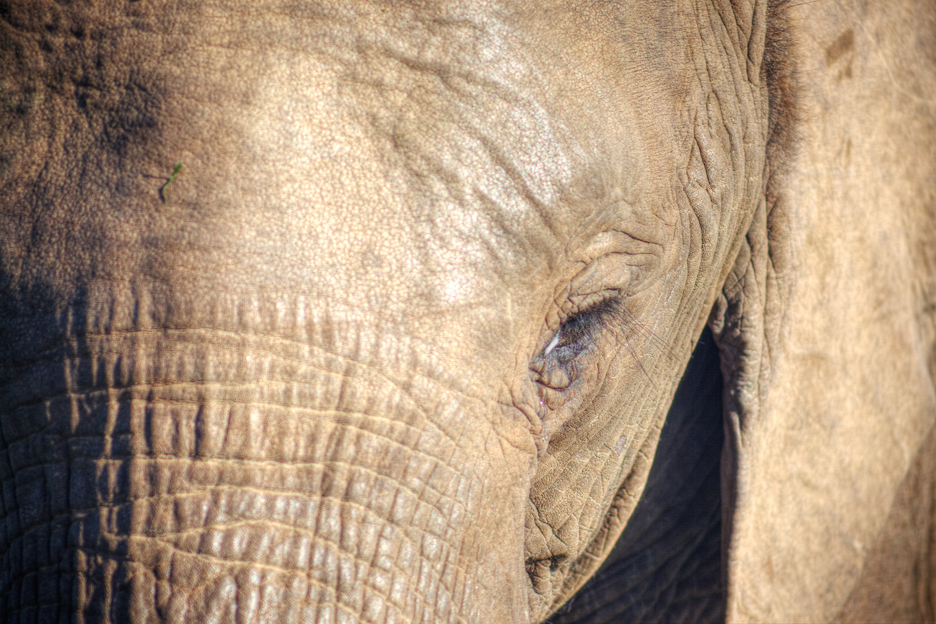 Seeing eye to eye with an elephant.