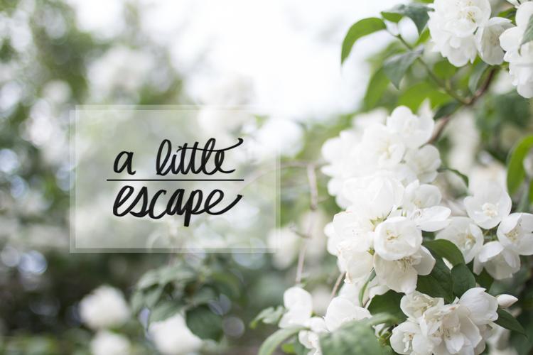 A Little Escape Title Flowers Blossom