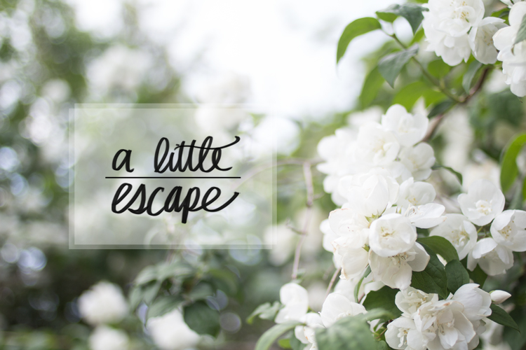 A Little Escape Title Flowers Blossom