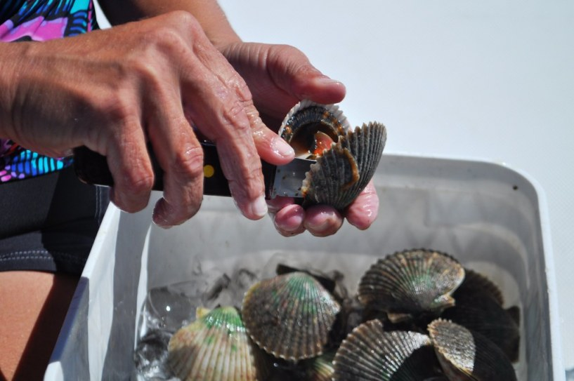 Scallops Being Cleaned, Homosassa, Fla., Sept. 10, 2014