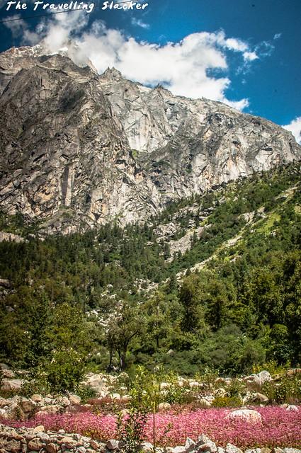 Sangla Valley (15)