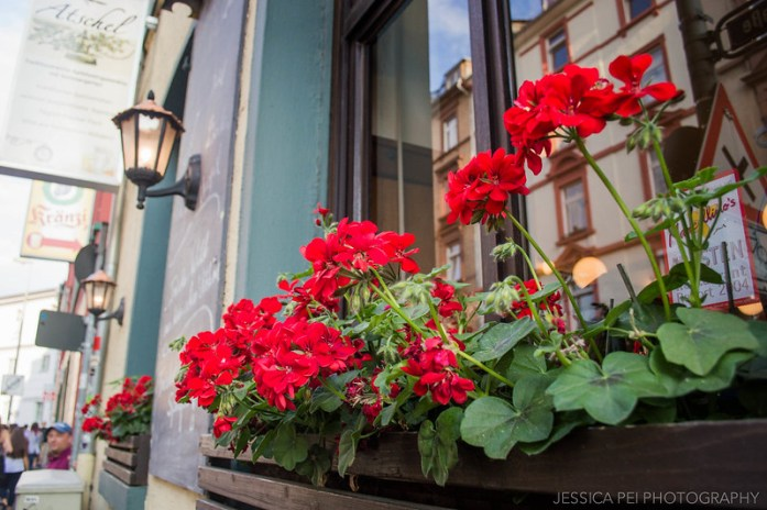 Frankfurt Germany Flowers