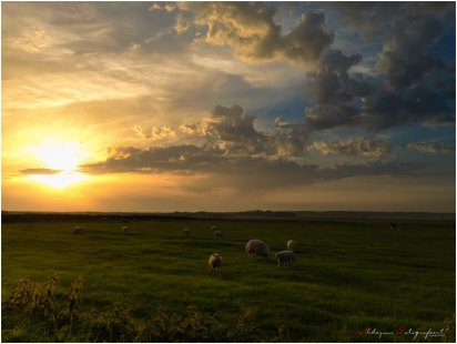Texel mit iPhone 4S