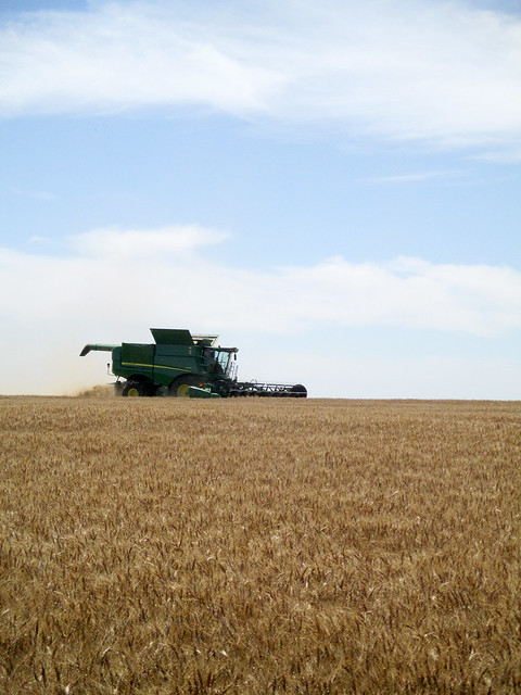 For once conditions are perfect for harvesting
