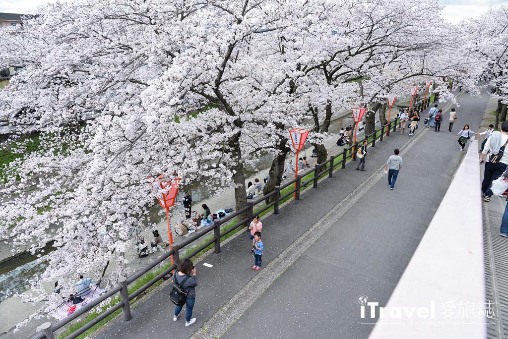 奈良赏樱景点 高田川千本樱 34