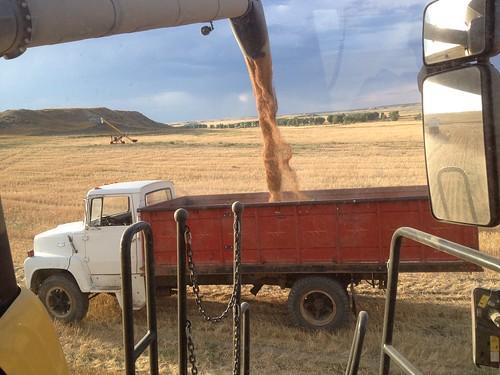 Z Crew: Grain Truck