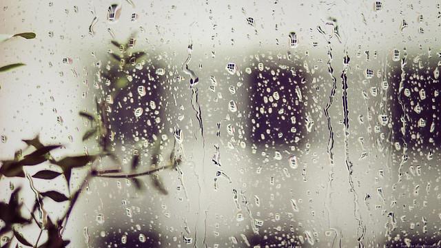 August Rain [Free Wallpaper]