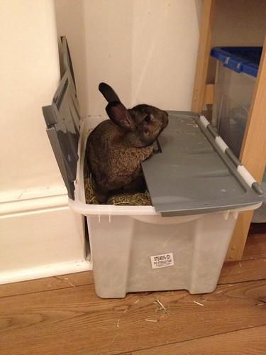 Oscar in hay box (6)