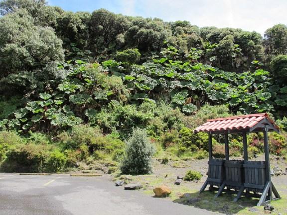 Irazu Volcano tour, Costa Rica flora