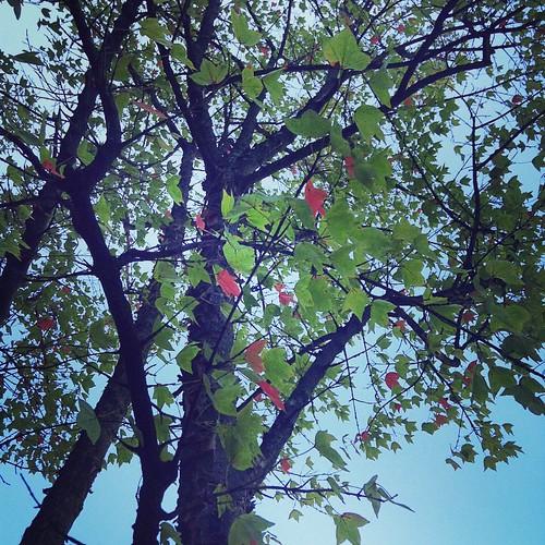 紅葉始まりした。