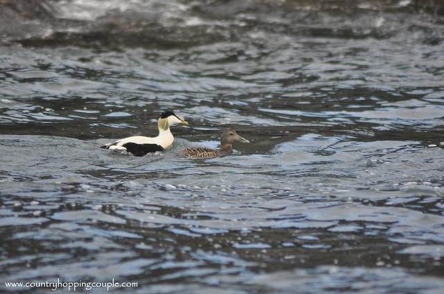 birds north berwick