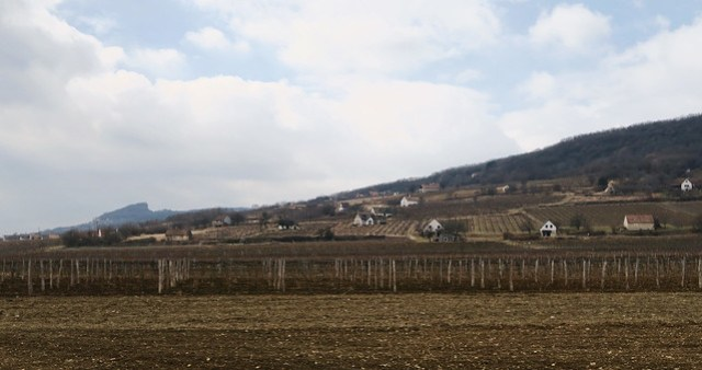 Small vineyards while rolling to Balaton